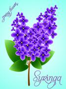 Spring background with beautiful blooming lilac. Vector Stock Illustration