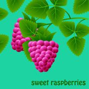 Red, juicy, sweet raspberries on a branch for your design. Vector Stock Illustration