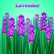 The lavender elegant card with frame of flowers and text. Vector Stock Illustration