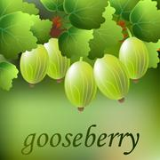 Green, juicy, sweet gooseberry on a branch for your design. Vector Stock Illustration