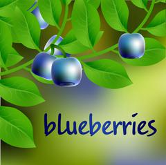 Blue-black, juicy, sweet blueberry on a branch for your design. Vector Stock Illustration