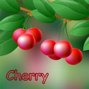 Red, juicy, sweet cherries on a branch for your design. Vector Stock Illustration