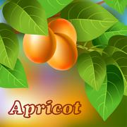 Orange, juicy, sweet apricots on a branch for your design. Vector Stock Illustration