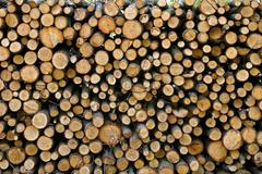 Felled Tree Trunks - stock photo