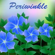 Periwinkle spring flower on blue background with place for text. Vector Stock Illustration