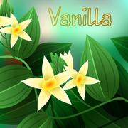 Vanilla orchid, Vanila planifolia, with green leaves and aerial roots. Vector - stock illustration
