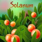 Vegetable and Herb, An Illustration of Fresh Ripe Solanum Stramonifolium Jacq - stock illustration
