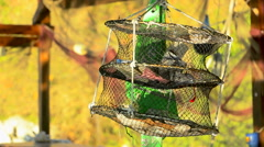 Decorative seashells hanging in a metal cage rg Stock Footage