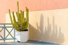 decor cactus in flower pots - stock photo
