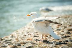 Seagull in sea spray Stock Photos