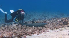 Fantastic dive with sharks in the reef to Blue Corner. - stock footage