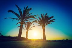 Tree palms and sunshine Stock Photos