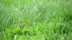 Bright spring grass in  wind Stock Footage