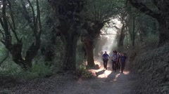 Group of pilgrims who go on a path lighted by the sun, through old hardwood Stock Footage