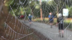 Spider web with dew drops on it, is hanging on the edge of a road that pilgrim - stock footage