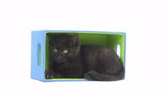 Cute black kitten in box Stock Footage