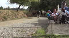 Herd of animals passing on a country road besides a terrace where many tourists - stock footage