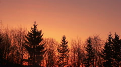 Pine forest silhouette. Sunset over forest, clear sky at sunset background Stock Footage
