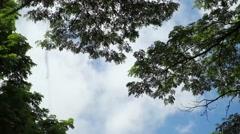 Blue Sky Lush Canopy Pan Stock Footage