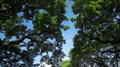 Lush Trees Tilt Up Stock Footage