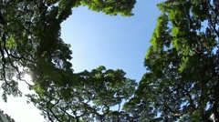 Spinning Lush Canopy  Stock Footage