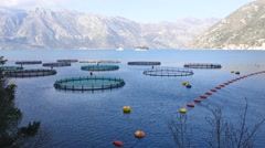 Fish farm in the Bay of Kotor Stock Footage