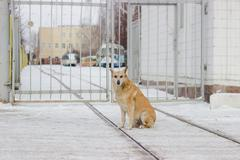 Stray dogs on street makes fear - stock photo
