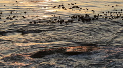 Ocean waves wash gently over a rock at dawn Stock Footage