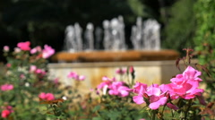 Rack focus-Beautiful pink flowers to fountain Barcelona Spain Stock Footage