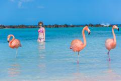 Flamingos beach. Aruba Stock Photos