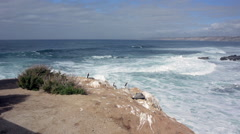 Pelicans Rest On Rocks Above Crashing Waves Stock Footage