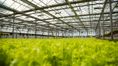 green plantation in the greenhouse - stock footage