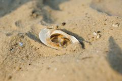Wedding rings in a shell - stock photo