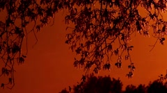 Pollen and tree leaves on the wind in sunset 4 Moving camera SLOW - stock footage