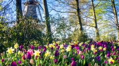 Beautiful spring park covered by tulips. Panoramic view - stock footage