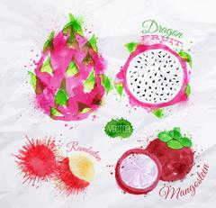 Exotic fruit watercolor dragon fruit, rambutan, mangosteen - stock illustration