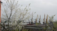 Spring flowering tree on a background of seaport. Stock Footage