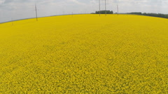 Flying low over a blooming canola field Stock Footage