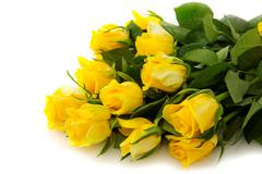 Yellow rose  bouquet isolated. - stock photo