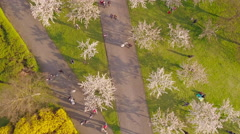 People walking in garden of blossoming sakura trees on sunset, aerial view. Stock Footage