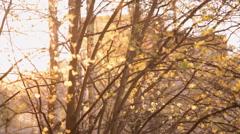 Sunset viewed through defocussed trees Stock Footage