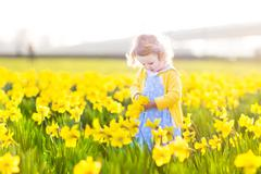 Beautiful curly toddler girl in a blue dress in field of yellow daffodil flowers - stock photo