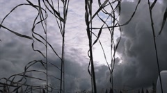 Black and white tapes sway from wind in summer day. Grey sky before heavy rain Stock Footage