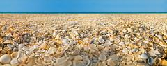 Beach covered with shells and sea on background. Panoramic view. Image with s Stock Photos