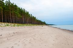 Endless coastline with forest - stock photo