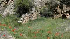 Spain poppies and aqueduct ruin Stock Footage