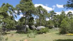 Spain Serrania de Cuenca pines rise above rocks Stock Footage