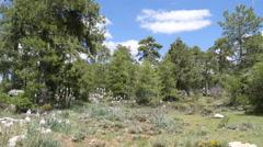 Spain Serrania de Cuenca pines with cloud Stock Footage
