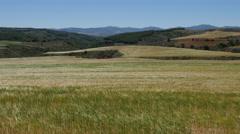 Spain Meseta wheat in rolling landscape Stock Footage