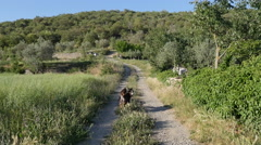 Spain Pyrenees country lane and dogs chasing stick Stock Footage
